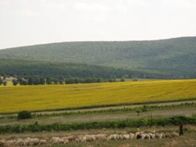 CAMERA AGRICOLA TULCEA
